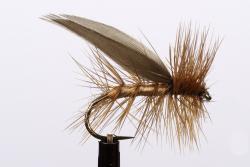 Brown Sedge (20037)