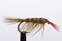 Shrimp (20125)